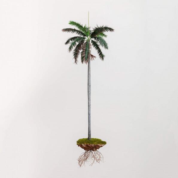Jorge Mayet, La palma sola