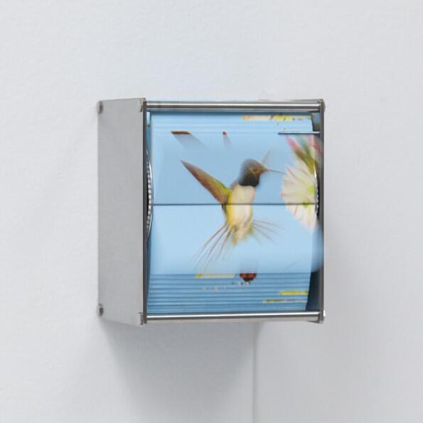 Juan Fontanive, Ornithology Ab