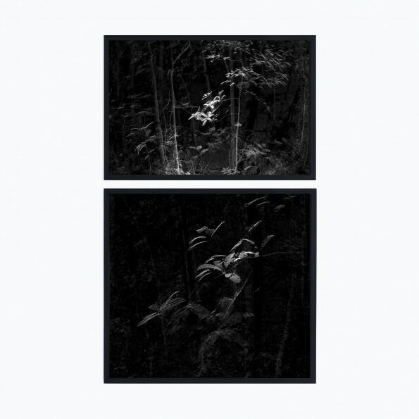 Point cloud forest, Daniel Steegmann Mangrané